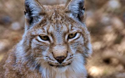 Tierpark Arth-Goldau