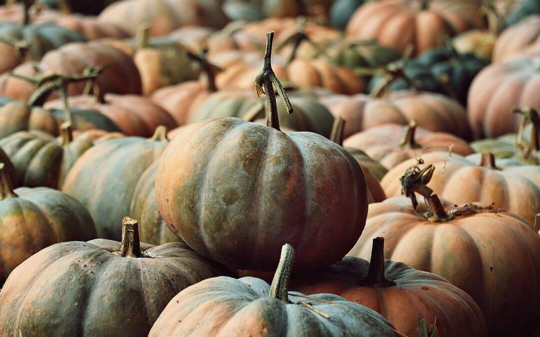 Herbstferien 2.10.-17.10.2021